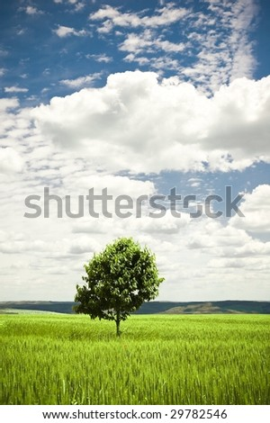 Lonely tree in a green wheat field