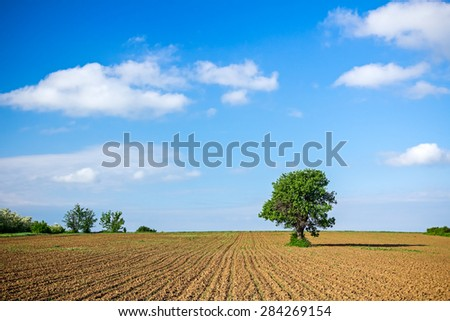 Lonely tree in a newly planted corn field under spring blue sky - stock photo