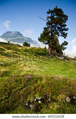 lonely tree in alpine scenery - stock photo