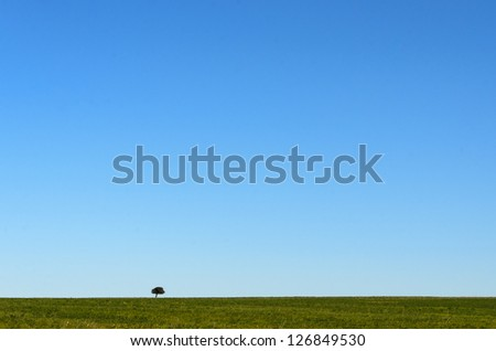 Lonely tree in an open field - stock photo