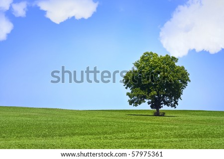 Lonely tree in beautiful green meadow with beautiful bright  blue sky - stock photo