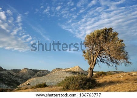 Lonely tree in Cyprus