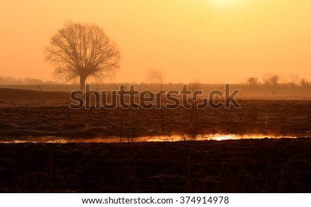 Lonely tree in early spring frosty morning at sunrise. Foggy spring sunrise with fog and sunlight - stock photo