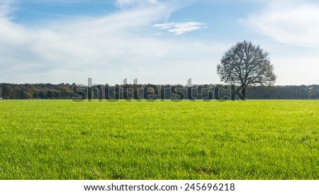 Lonely tree in grass land - stock photo