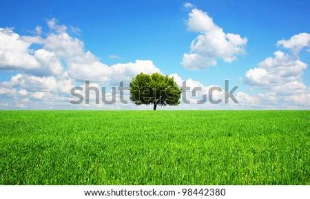 lonely tree in green field. - stock photo