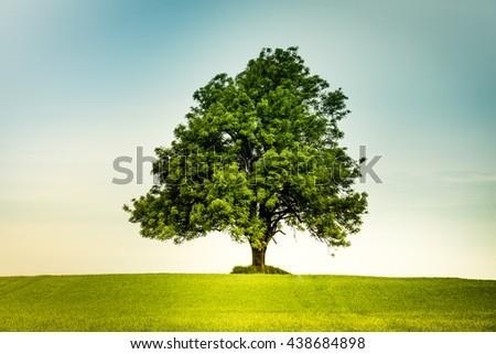 Lonely tree in the center on a green field with a  retro feeling
