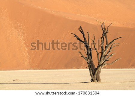 Lonely tree in the desert - stock photo