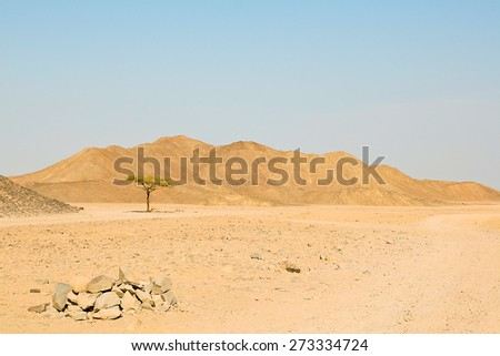 Lonely tree in the desert on the blue sky and mountains background - stock photo