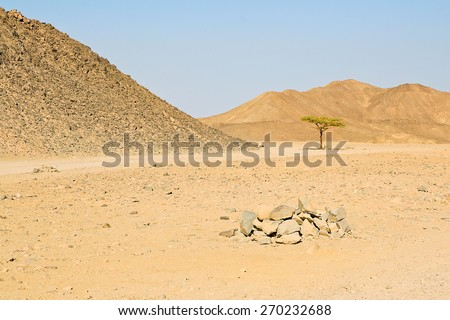 Lonely tree in the egyptian desert on the blue sky and mountains background - stock photo