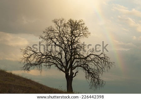 Lonely tree in the field. Afternoon light and rainbow in the cloudy sky - stock photo