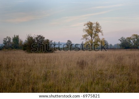 Lonely tree in the field in late autumn