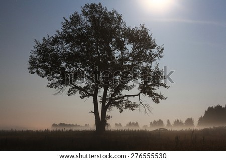 lonely tree in the field landscape - stock photo