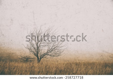 Lonely tree in the fog - stock photo