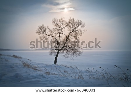 lonely tree in the middle of icy snow-covered field - stock photo