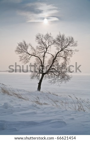 lonely tree in the middle of icy snow-covered field