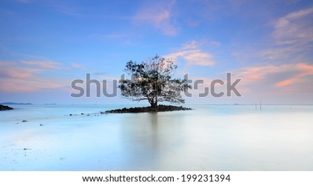 Lonely tree in the middle of sea during sunset - stock photo