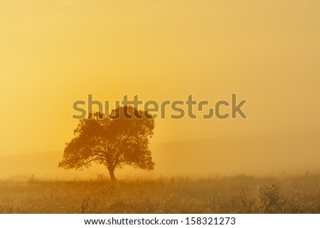 Lonely tree in the mist, nature autumn season