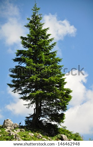 Lonely Tree in the Mountains - stock photo