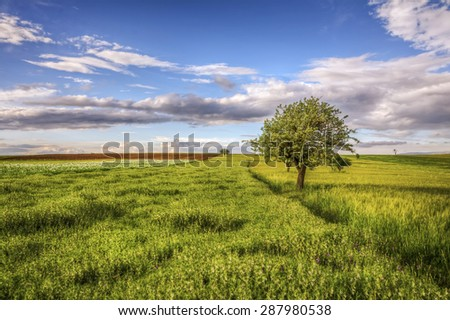 Lonely tree in the nature - stock photo