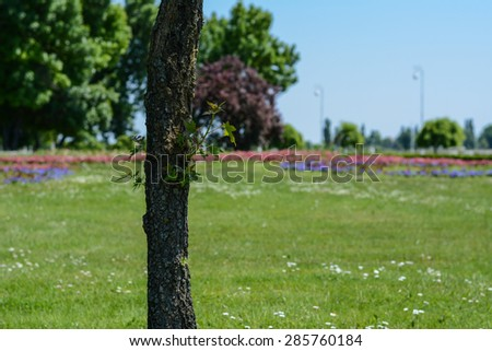 Lonely tree in the park. Close up of tree with small green leaves. In the background is the beautiful park. Tree is on the left side of the picture. - stock photo