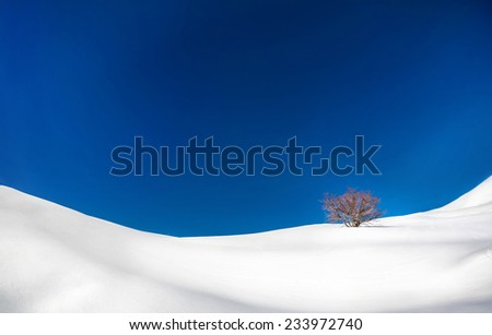 Lonely tree in the snowy mountains at blue sky in winter - stock photo