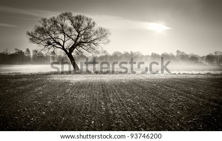Lonely tree in the winter morning on an icy field - stock photo