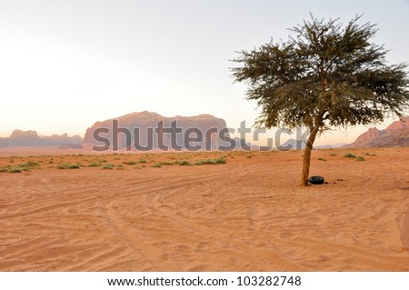 Lonely tree in Wadi Rum (Jordan) - stock photo