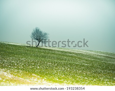 lonely tree (47) in winter season - stock photo