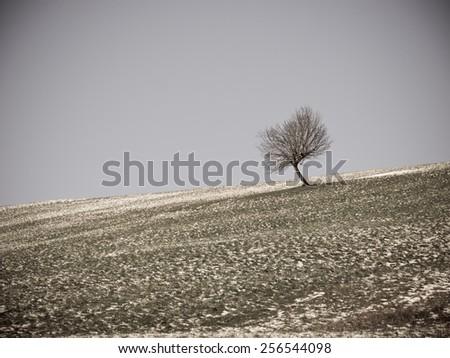 lonely tree in winter season - stock photo