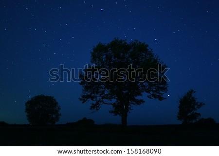 lonely tree night stars - stock photo