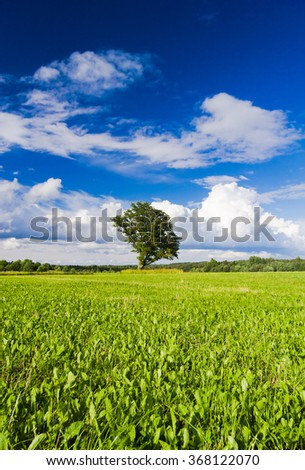 Lonely Tree Nobody Outside  - stock photo