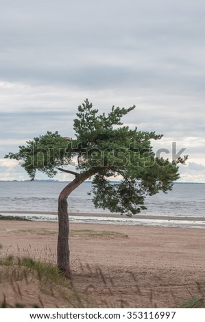 Lonely tree on a empty beach.