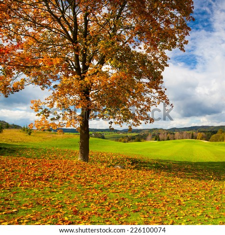 Lonely tree on a empty golf course in autumn - stock photo