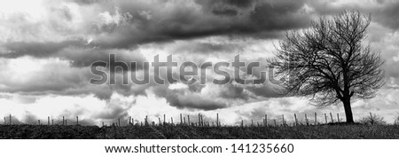 Lonely tree on a field in front of a vineyard with a stormy sky - stock photo