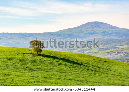 Lonely tree on a hill in a field in Tuscany