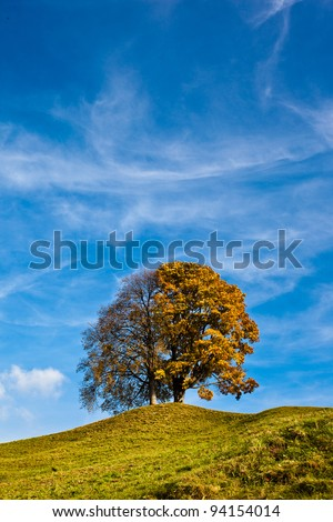 Lonely tree on a hill with blue sky in the background