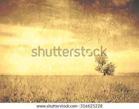 Lonely tree on a mountain meadow / Solitude with a lot of copy space - on a grungy wall canvas texture / The beauty of loneliness. - stock photo