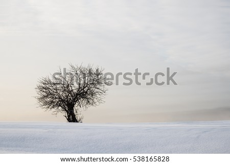 lonely tree on a snow-covered field