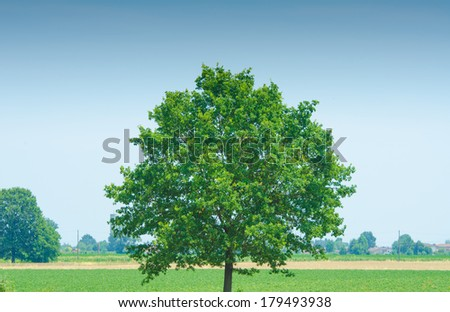 Lonely tree on bright summer day - stock photo