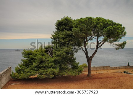 Lonely tree on  coast in cloudy day.