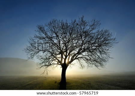 lonely tree on field at dawn