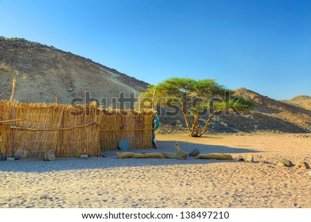 Lonely  tree on the egyptian desert - stock photo