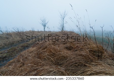 Lonely tree on the field with morning mist - stock photo