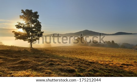 Lonely tree on the hill, above the misty valley in Bohemian Switzerland - stock photo