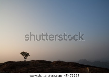 Lonely tree on top of the hill at sunrise