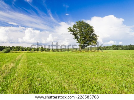 Lonely Tree Plain Nature  - stock photo