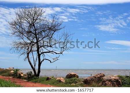 Lonely tree scene.