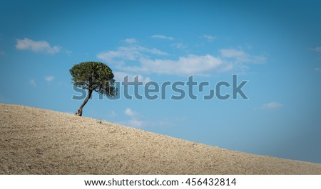Lonely tree standing on the top of a  hill and blue cloudy sky. - stock photo