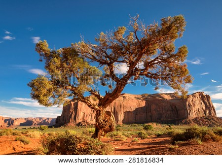Lonely tree still a life in Monument Valley, Utah - stock photo
