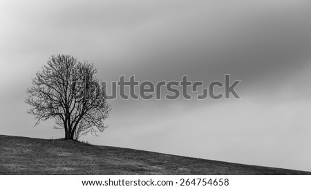 Lonely Tree. Sweet Solitude. Cold and Cloudy day in the black forest region of Germany - stock photo